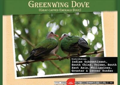 Greenwing Dove