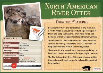 North American Otter